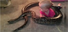 Americano polemiza ao compartilhar vídeo da sua cobra píton de 4 metros enrolada na sua filha de 1 ano