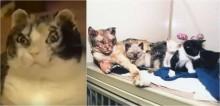 Mesmo ferida, mãe felina enfrenta incêndio para salvar a vida dos seus cinco gatos filhotes