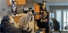 Cachorro criado junto com gatos adquire mesmo comportamento de felinos e impressiona a internet