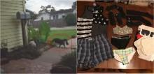 Gato é pego roubando roupas dos vizinhos e levando peças para sua casa
