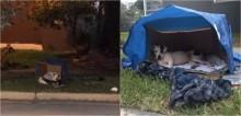 Na esperança que o dono voltasse para buscá-lo, cachorro se nega a deixar local em que foi abandonado