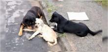 Motorista não presta socorro a cão atropelado em Blumenau e outros dois cachorros consolam amigo