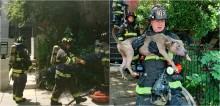 Bombeiros combatem fogo em residência e salvam 6 cães com vida do local