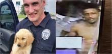 Filhote de golden retriever que foi roubado é recuperado e polícia segue às buscas pelo terceiro envolvido no roubo