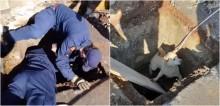 Três cachorros que ficaram presos em bueiro são resgatados em Passo Fundo, RS