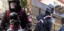 Motoboy realiza entregas acompanhado da sua cadela e distribui ração para cães de rua durante corridas