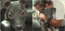 Taxista socorre cachorro vítima de acidente de trânsito e o transforma em seu co-piloto