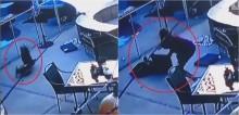 Jovem flagra gavião agarrando seu cachorro yorkshire - confira o vídeo