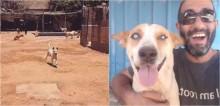 Cão cego sempre corre quando ouve a voz de seu tutor: 'Amor incondicional e puro'