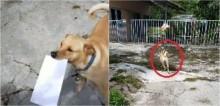 Cão recebe correspondências de carteiro há 4 anos e entrega para donos corretamente; vídeo