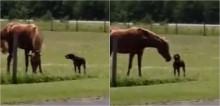 Cachorro corre eufórico com cenoura na boca para entregar para o seu amigo cavalo