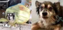 Cão idoso abandonado a própria sorte  em sacola de lixo recebe 2ª chance de ser feliz