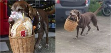 Cão labrador entregador tem cesta roubada por ladrão e gera revolta em comunidade