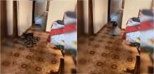 Cadelinha corre na frente de dona cadeirante para tirar os tapetes do caminho e facilitar seu acesso na casa; vídeo