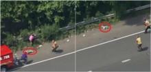 Shih-tzu veloz escapa de supervisão de bombeiros em rodovia e dá início a fuga digna de filme; confira