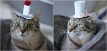Jovem confecciona chapéus sob medida para chamar atenção e incentivar adoção de gatinha; veja fotos