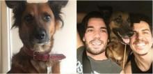 Caso Cajú: Internautas se mobilizam para ajudar a encontrar cachorro perdido em acidente de carro