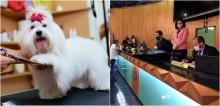 Câmara de Uberlândia cria projeto que obriga câmeras em setores de atendimento animal, após caso em pet shop