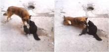 Viralizou: Mamãe gata mostra sua ninhada de gatinhos para seu melhor amigo: um cachorro