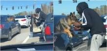 Durante congestionamento, motorista leva seu filhote para dar beijinho em pastor alemão de outro carro - vídeo