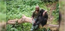 Gorila é consolado por guarda-florestal depois de perder mãe em santuário na África