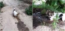 Ajudando dono a regar horta, cachorro escava rapidamente a terra para que água chegue às plantas
