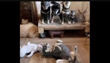 Você consegue encontrar o cachorro de verdade nesta sala com caninos esculpidos em madeira?