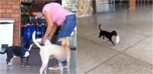 Vídeo: Cão derrete corações ao ajudar dona a carregar as compras do supermercado