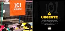 Abrigo que cuida de 300 cães abandonados é covardemente roubado por ladrões no RS