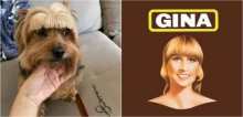 Dona corta franjinha de seu cão yorkshire e internautas o associam ao visual da mulher dos palitos Gina