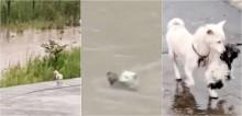 Cadela vira-lata arrisca sua vida para salvar filhote preso no meio de galhos em enchente de rio