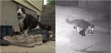 Dono cria grupo no Facebook para devolver sapatos que seu gato rouba de vizinhos