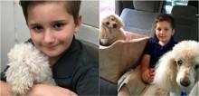 Menino adotado ajuda cães idosos de abrigo a encontrarem um lar: 'ele faz o possível para que se sintam amados'