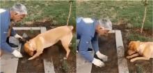 Cachorro concentrado ajuda dono a cavar terra para plantar mudinha e conquista fãs no Twitter; vídeo