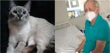 Gatinha que foi encontrada em saco na rua retribui amor recebido salvando vida de dono em Recife