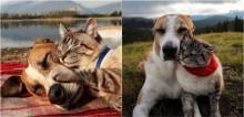 Vídeo: Cachorro assiste pôr do sol abraçado a gato e viraliza