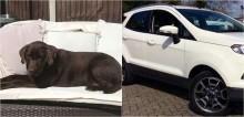 Mulher fica desolada depois que ladrão rouba seu carro com seu cachorro labrador dentro