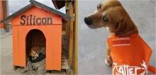 Funcionários de loja acolhem cão de rua e constroem casinha sob medida para ele morar