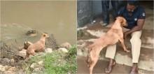 Cadela que perdeu família em soterramento na Índia e ajudou autoridades a localizarem os corpos ganha nova família