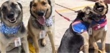 Restaurante adota cães de rua que pediam comida no local: 'São muito simpáticos com todos os nossos clientes'