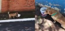 Mesmo tendo lar, cão passa todos os dias em restaurante buscar marmita com seu balde - vídeo
