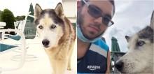 Motorista de entrega da Amazon salva cachorro husky idoso de afogamento em piscina de quintal