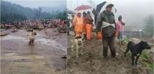 Cães estão há dias em local à procura de família vítima de deslizamento de terra: 'Lealdade eterna'