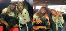 Em retorno ao Brasil, Anitta adota cães idosos com deficiências que viviam no Instituto Luisa Mell