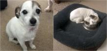 Cão que vivia em abrigo é adotado e carrega tigela de comida por toda parte com medo de perdê-la