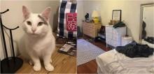 Ache o gato: americana compartilha galeria de fotos e desafia você a encontrar seu felino