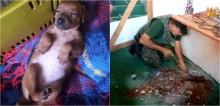 Vizinhos se mobilizam para ajudar a salvar filhote de pinscher presa em encanamento de esgoto