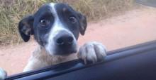 Cadela abandonada em estrada pula em janela de carro 'pedindo socorro' e ganha nova família