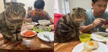 Em série de fotos hilárias, esposa mostra como esse gato 'surrupiou' o marido dela