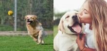 4 dicas valiosas para prover ao seu cão o máximo de qualidade de vida